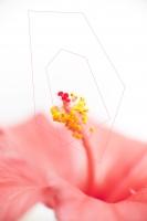 33_hibiscus.jpg